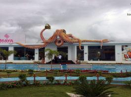 India Seashell Museum, Mahabalipuram Museum