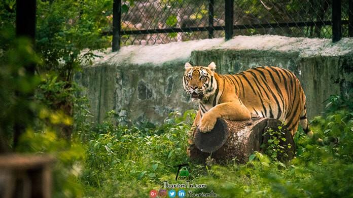 Aringer Anna Zoological Park
